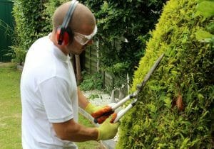 Weed removal hedge pruning